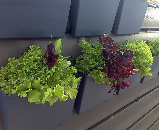 thinpot growing vegetables